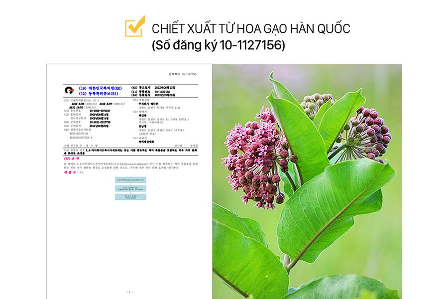 Chiet Xuat Hoa Gao Han Quoc